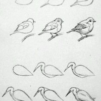 Learn the easiest ways to draw birds
